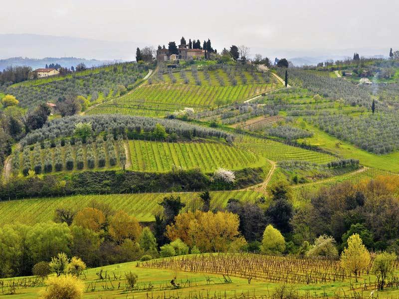 Strada del vino e dell'olio del Chianti classico